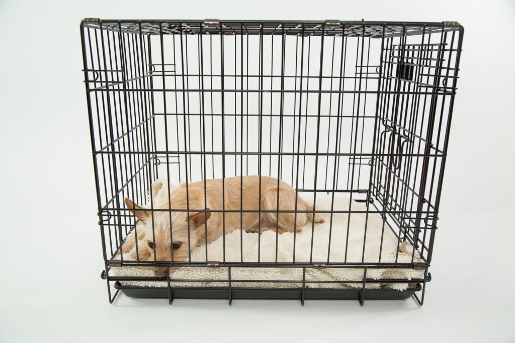 Top 5 Best Wire Dog Crates in 2016