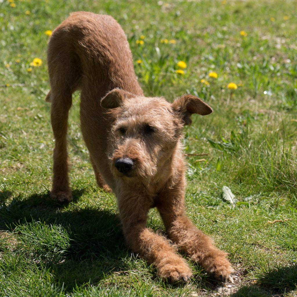 #Yoga #Puppy