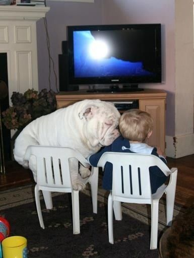 You Wont Believe What This Bulldog Did