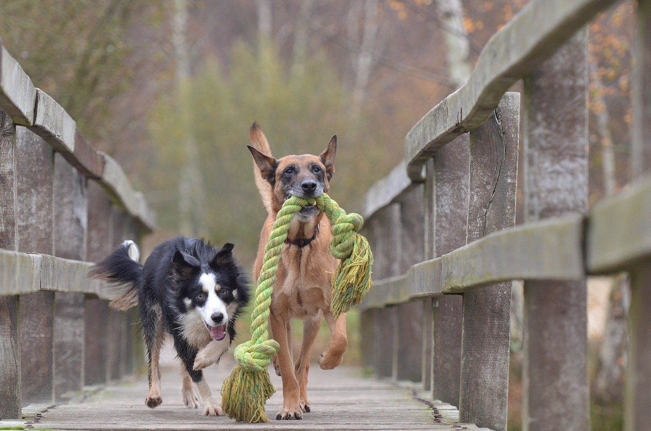 Top 5 Dog Toys For Big Dogs