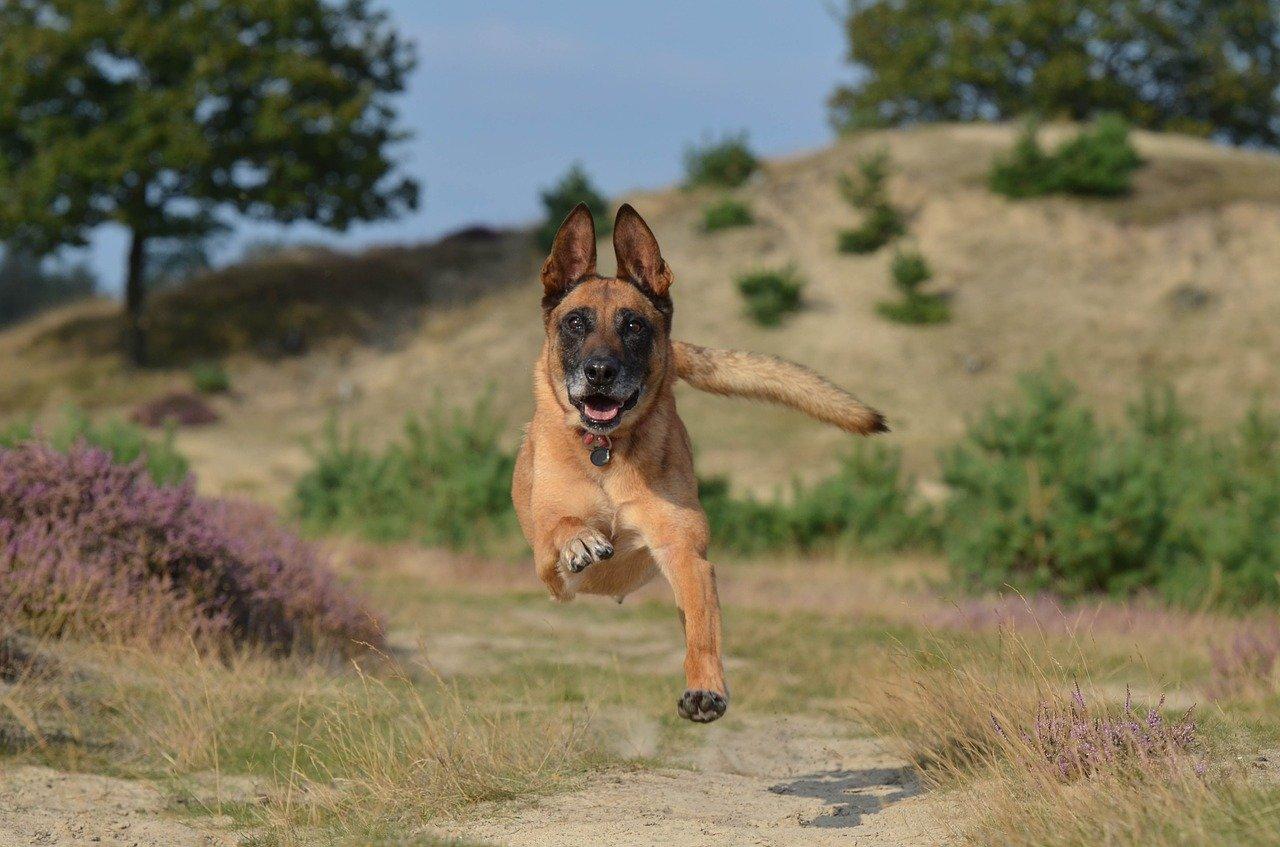 Jumping Pup